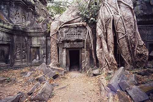 temple-ta-prohm-500[1].jpg