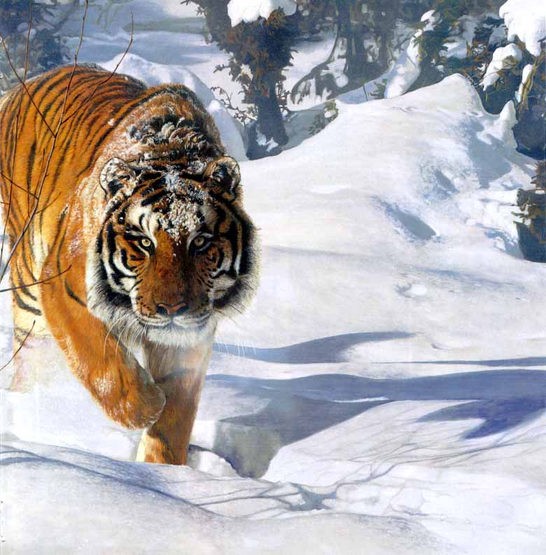 Tyger_Tyger-SiberianTiger_on_snow-Painting[1]